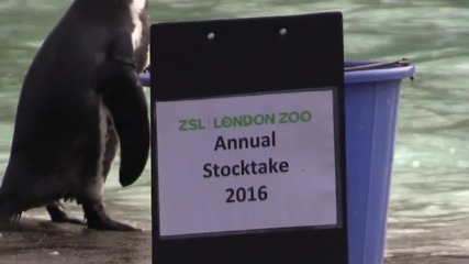 UK: All creatures great and small - London Zoo carries out annual stock take