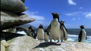 Penguin Fail - Компилация падащи пингвини ..