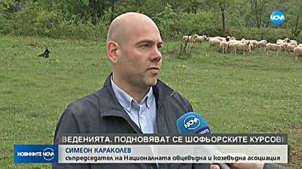 Каква ще бъде цената на българското агнешко за Гергьовден?