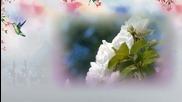 Розата на Сарон