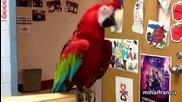 Смях ... Папагали танцуват - Компилация