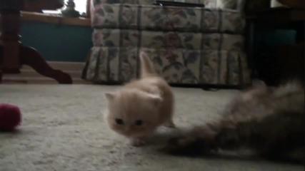 Най-сладкото и малко коте