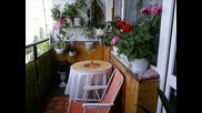 Тарантела и цветя