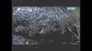 Анаконда Изяжда Алигатор