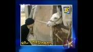 ! Класация Топ Магария В На Рояци.ком- 18.11.2008 !