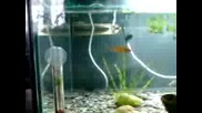 рибки 22