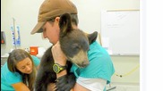 A Rafting Guide Saved A Baby Bear That Was Stranded By A River
