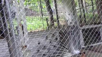 Зоопарк-кюстендил