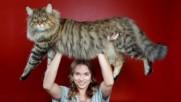 10 невероятни факта за котките, които едва ли сте чували