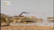 Атака на крокодил
