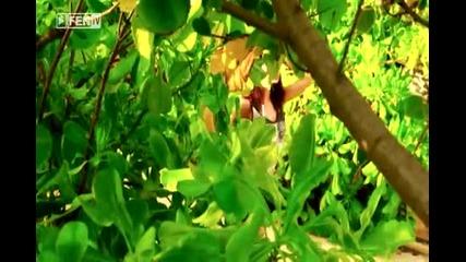• Алисия - Мистър Грешен ( Официално видео ) •