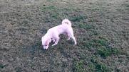Роки се забавлява в парка