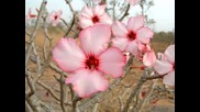 Sarah Brightman - Desert Rose