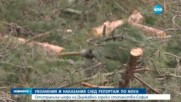 СЛЕД РЕПОРТАЖ НА NOVA: Уволниха горски шеф за незаконна сеч