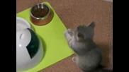 Изключително Сладко Котенце Мяука !!