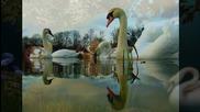 Лебеди... ... (music Fausto Papetti -saxophone) ...