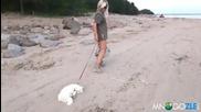 Смях ! Коте което мрази плажа !