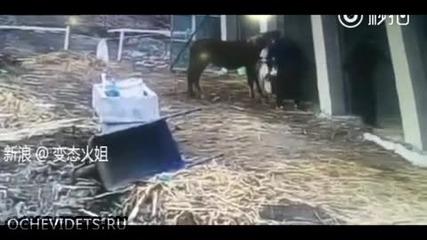 Трима мъже едва се справиха с разбесняло се бойно куче