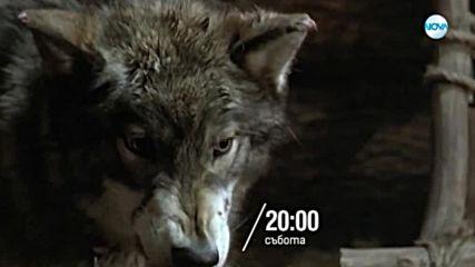 """""""Белият зъб"""" на 12 януари в 20.00 ч. по NOVA"""