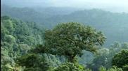 Гласът на природата – Кевин Спейси е дъждовната гора - Conservation International