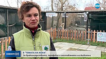 """В аванс от """"Темата на NOVA"""": Трафикът на диви животни"""