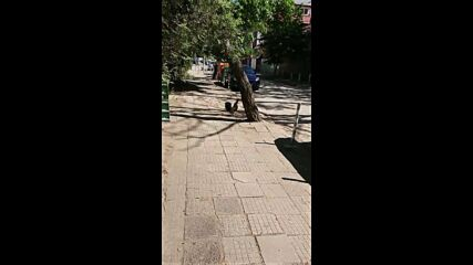 """От """"Моята новина"""": Кокошки и петли се разхождат в София"""