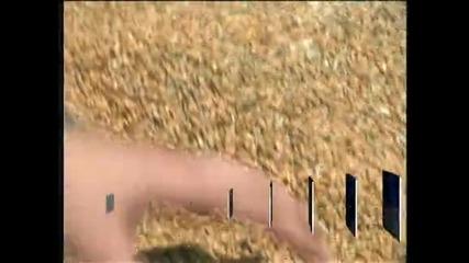 Хлебното жито догодина ще бъде средно с около 30 - 40% повече, отколкото през 2012 година