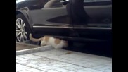 Екшън,котки Се Млатят Здравоо