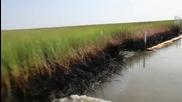 Блато в Плакмайнс париш, Луизиана, замърсено с петрол - 5 август 2010