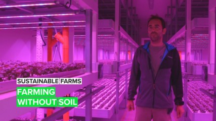 Sustainable Farms: The basil farm of the future is in Italy