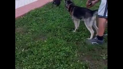 Кученца приятели
