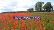 Viragzo pipacs mezok - Flowering fields. Mehdi - Eastern Sunset