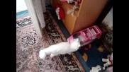 Бяло Коте Изучава Жилище