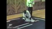 Много забавни инциденти с животни! ( много смях )