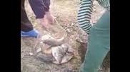 крадци на риба