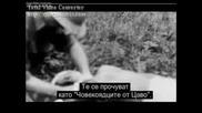 Най - Смъртоносните Животни:лъв