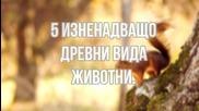 5 Изненадващо древни вида животни.