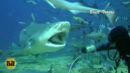 На косъм от смъртта! Зрелищно гмуркане с акули!