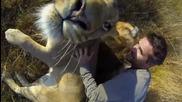 Лъвската прегръдка