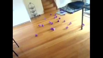 Мъж подмамва котка с лазерче - Смях :)