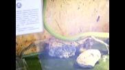 Зелена Змия