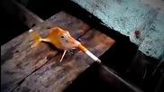 Риба пуши цигара