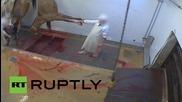 France: Ales abattoir shut down for using cruel slaughter methods *GRAPHIC*