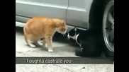 Другият вид ръмженето на котката