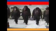 Маймуни танцуват хоро...много яко