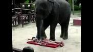 Elephant Massage.3gp