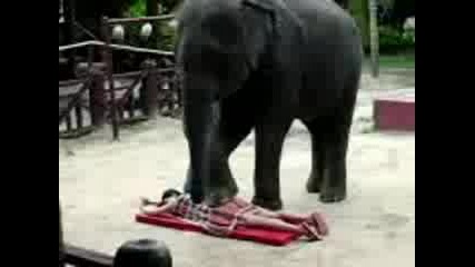 Elephant Massage.3gp