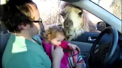 Камила си хареса малко дете