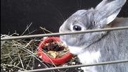 моето сладко зайче