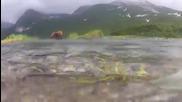 Да надникнем в устата на мечка гризли